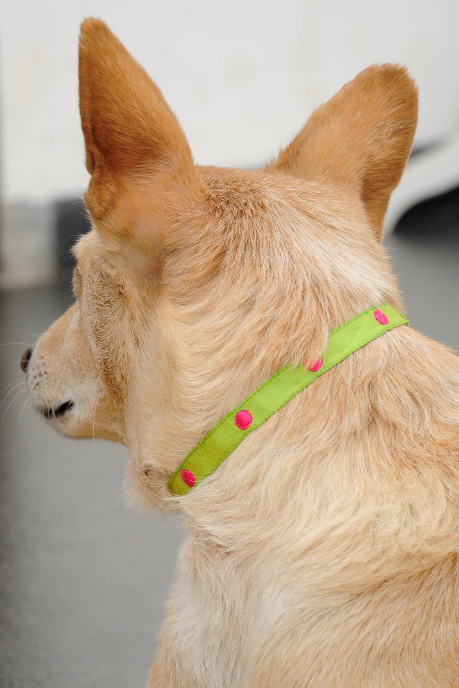 Small Green Collar