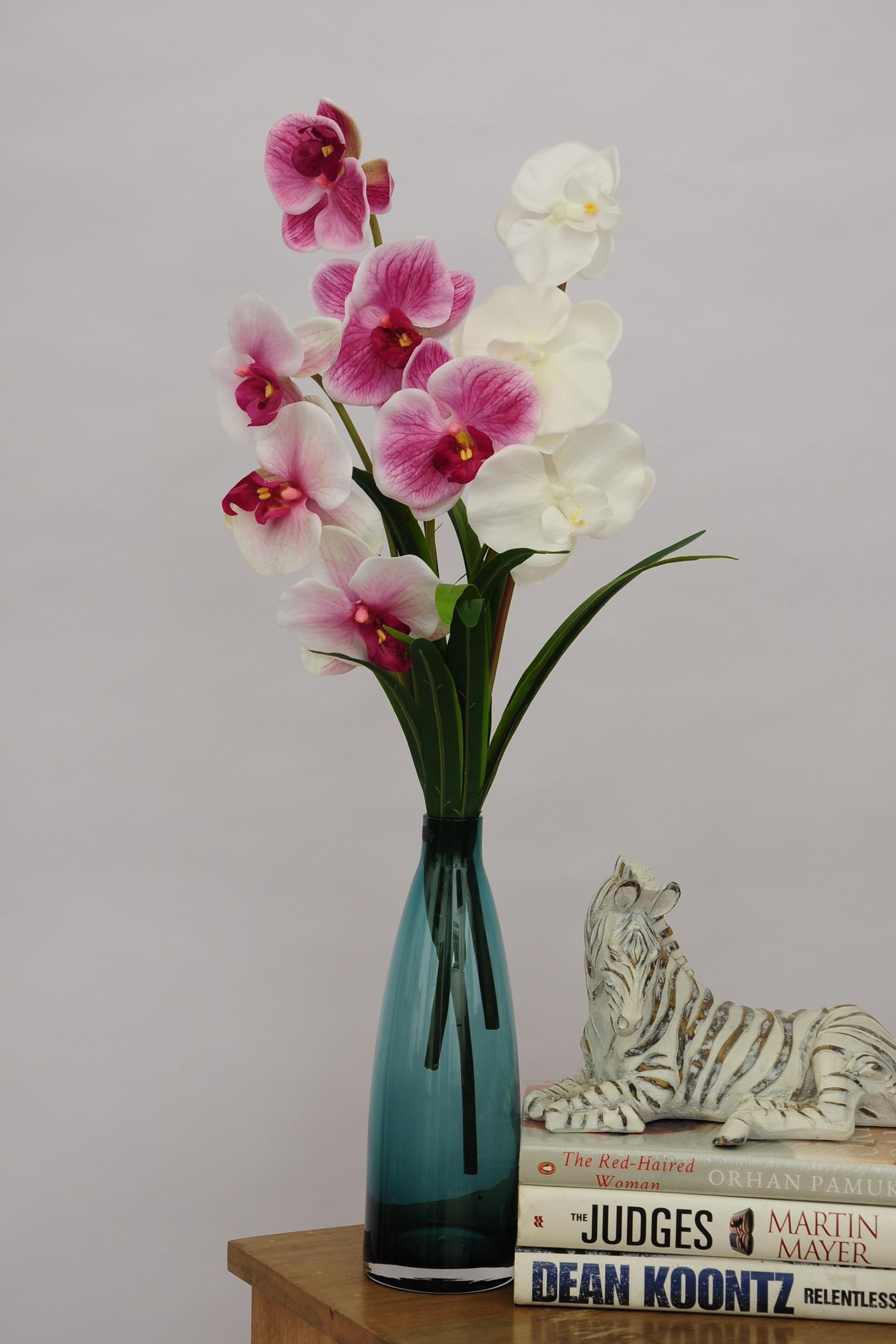 Dark Purple Orchids