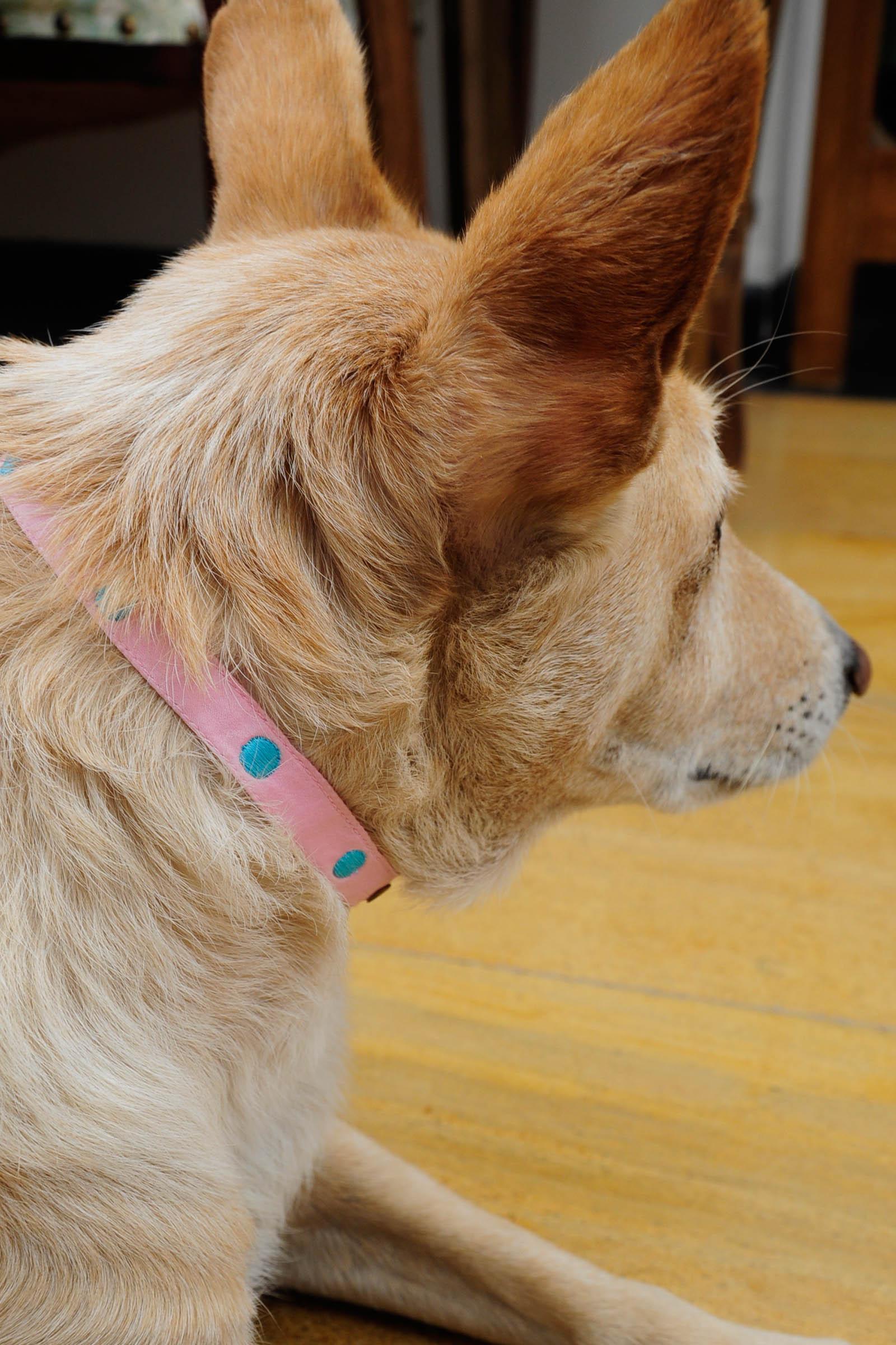 Small Pink Collar